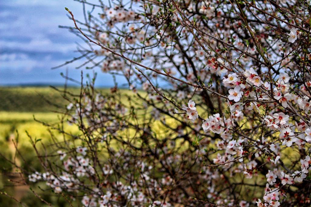 春のシーバス対策ルアー